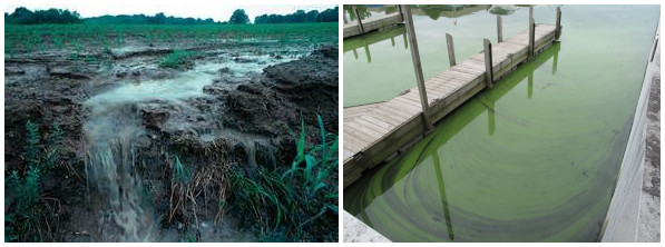 algae bloom caused by fertilizer runoff