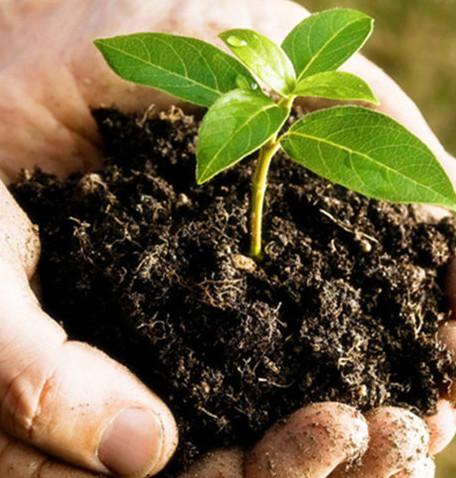 Granular Organic Fertilizer: Beneficial to Sturdy Growth of