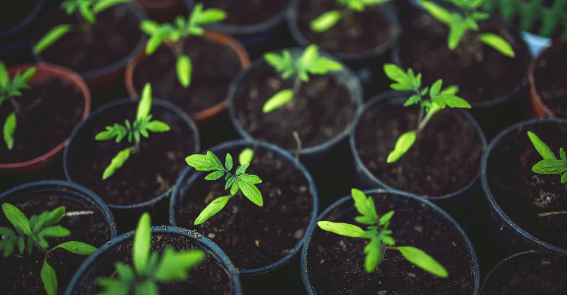 organic fertilizer helps plants growth
