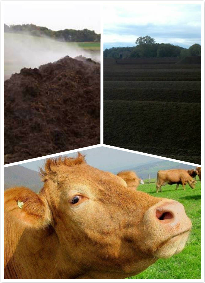cow manure fertilizer